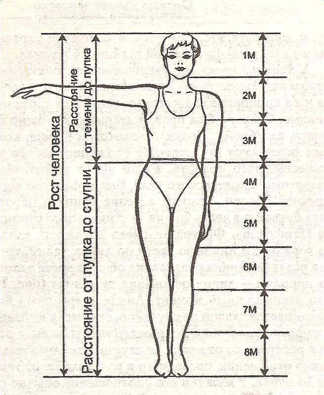 На рисунке 1 представлены идеальные пропорции женской фигуры